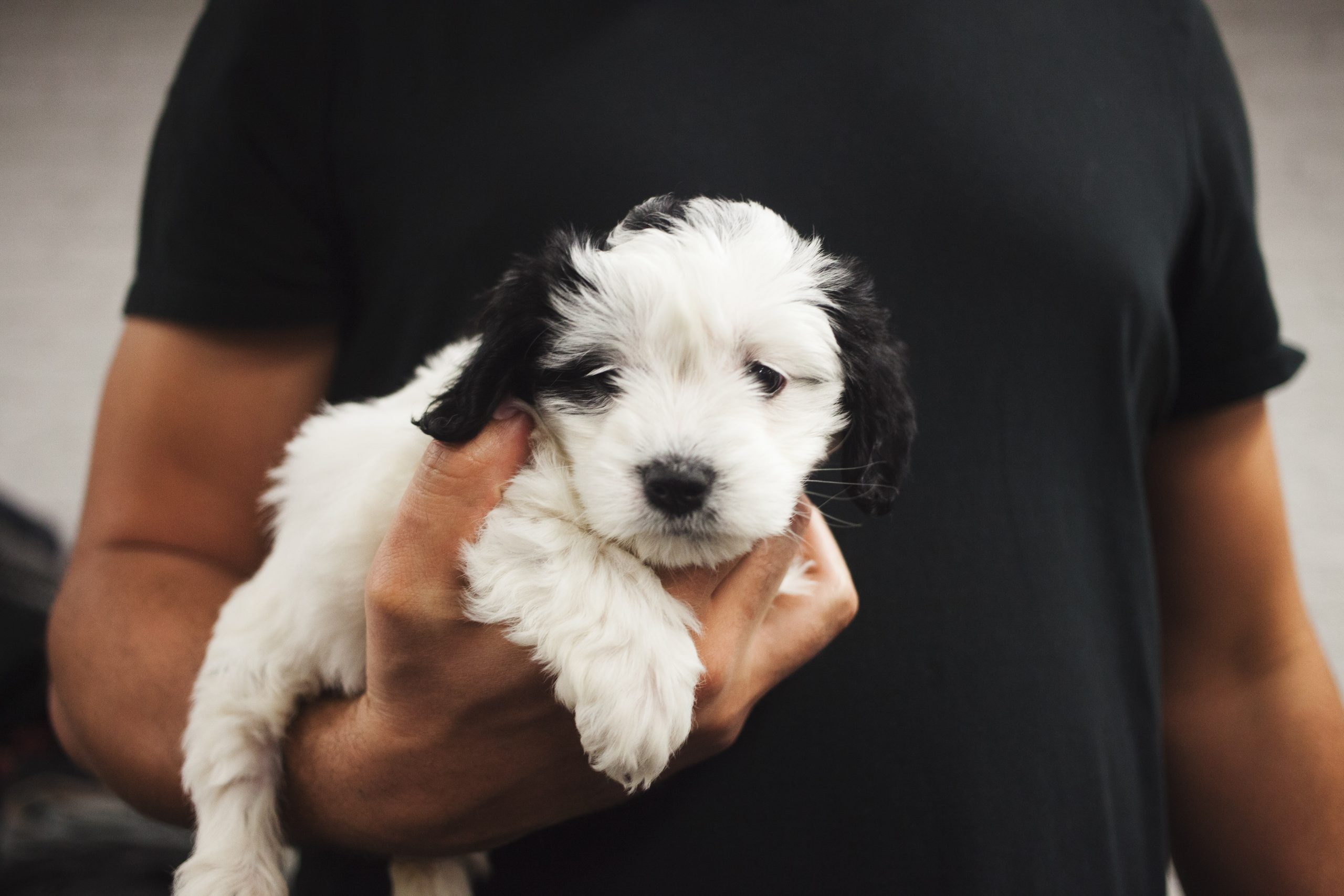 Puppies are cute, but not sexy